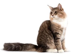 Salud y nutrición para gatos