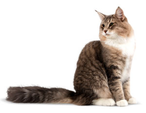Feline Health Nutrition