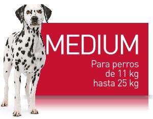 SHN - MEDIUM (11-25KG)